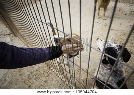 Giving Love About Abandoned Dogs In A Kennel