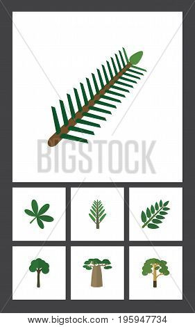 Flat Icon Natural Set Of Wood, Spruce Leaves, Jungle And Other Vector Objects