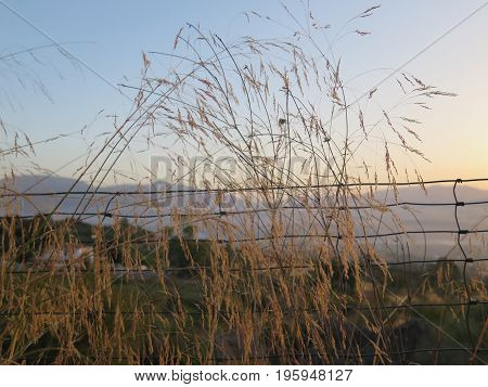 Spindly Wild Grass In Morning Sunshine