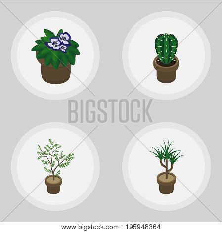 Isometric Flower Set Of Houseplant, Fern, Peyote And Other Vector Objects