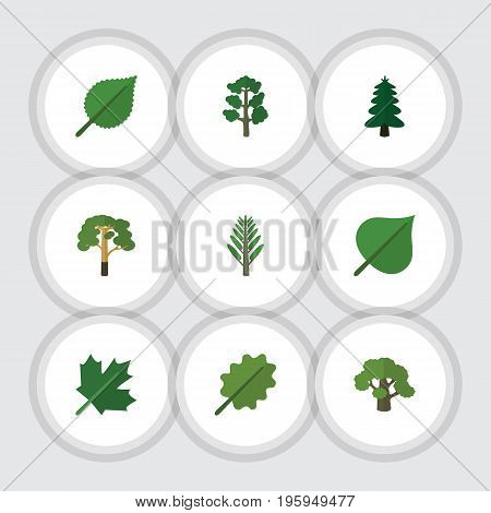Flat Icon Nature Set Of Alder, Wood, Tree And Other Vector Objects