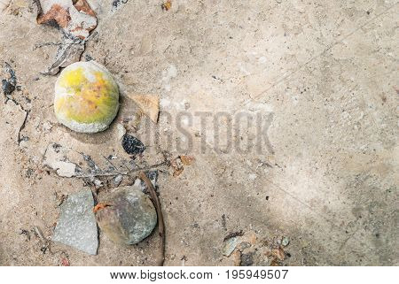 Coconut and other dead plant on beach copy space