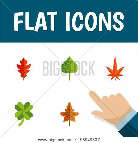 Flat Icon Leaves Set Of Alder, Hickory, Leafage And Other Vector Objects