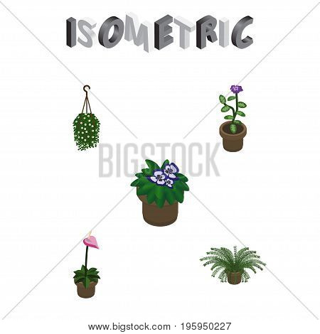 Isometric Flower Set Of Blossom, Grower, Flowerpot And Other Vector Objects