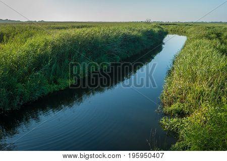 Wild vegetation along the river bank. Landscape