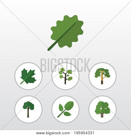 Flat Icon Natural Set Of Alder, Decoration Tree, Evergreen And Other Vector Objects