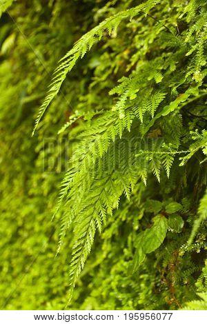 Fern in the jungle of costa rica
