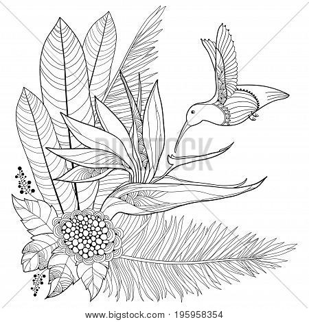 Vector flying Hummingbird or Colibri, Strelitzia reginae, palm leaf in contour style isolated on white background. Outline tropical bird and ornate exotic flower for summer design and coloring page.