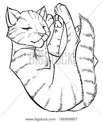 tabby cat comfortably sleeps - vector illustration