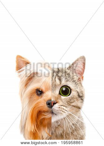 Conceptual portrait of a cat and a dog from half a face, isolated on a white background