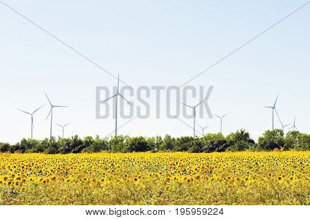 Windmills for electric power production nature renewable ecology on sunflowers field