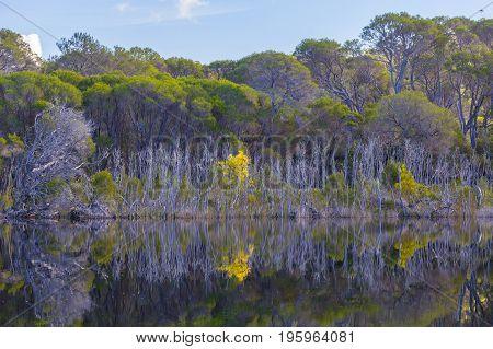Native Australian trees on riverbank at Croajingolong National Park Australia