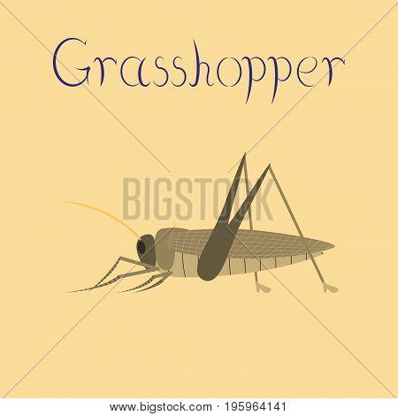 flat illustration on stylish background grasshopper animal