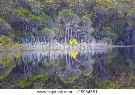 Native Australian trees reflecting beautifully in still water. Wallagaraugh River Croajingolong National Park Australia