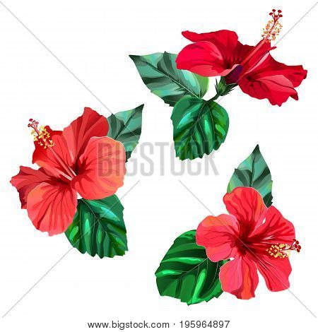 Three beautiful red hibiscus flowers with leaves. Watercolor effect. Vector illustration in eps10 format.