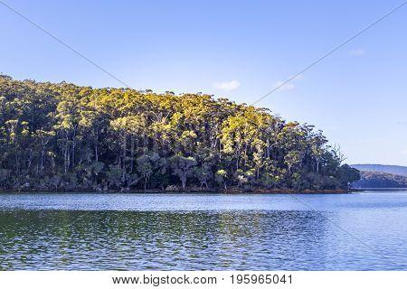 Paperbark Trees on the shores of Wallagaraugh River Victoria Australia