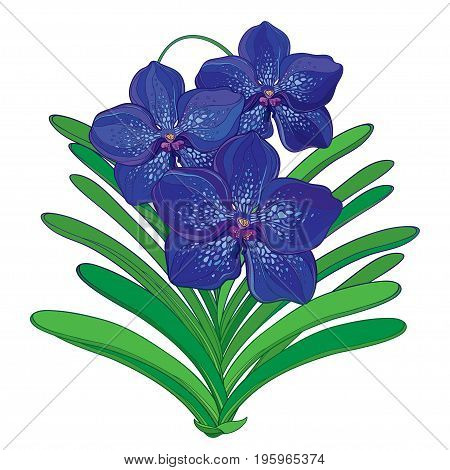 Vector bouquet with outline blue Vanda orchid flower and green leaf isolated on white background. Epiphyte tropical flower. Exotic Vanda in contour style for summer design.