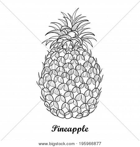 Vector drawing with outline Ananas or Pineapple fruit and leaf in black isolated on white background. Perennial tropical plant in contour style for summer design, juicy fresh menu and coloring book.