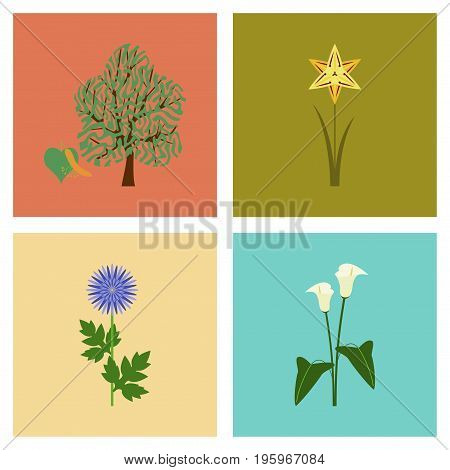 assembly of flat Illustrations floral flower calla aster narcissus linden