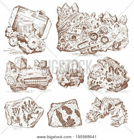 Fossilized plants, stones and minerals, crystals, prehistoric animals, archeology or paleontology. fragment fossils. engraved hand drawn in old sketch and vintage style