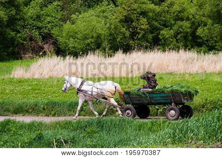 Horse cart carrying hay harvest on rural road