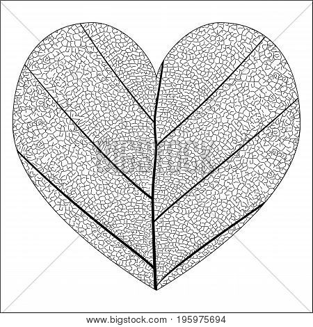 Botanical series Elegant detailed Single leaf closeup texture structure in sketch style black and white on white background in the love heart shape