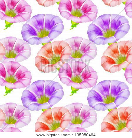 larger bindweed. Texture of flowers. Seamless pattern for continuous replicate.