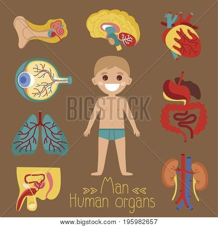 Male health medical poster with human organs. Kidney, penis, lung, eye, ear, heart, stomach, brain, intestine medical vector illustration. Internal organs of boy icons, human body anatomy infographics
