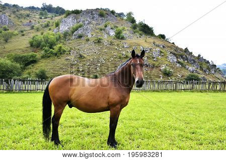 horse on a meadow. Horses on a meadow with green grass in summer. Herd of horses on a meadow