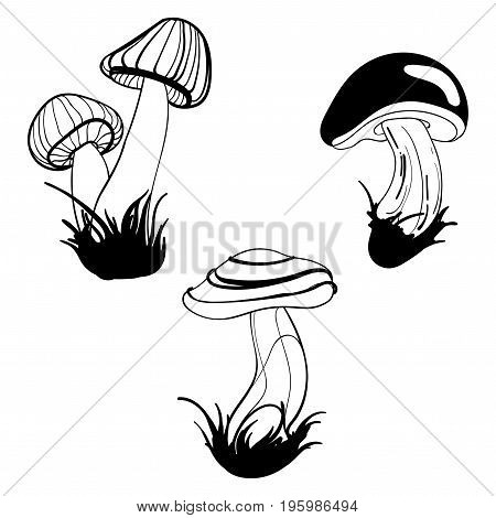 Vector set of mushrooms. Collection of stylized edible mushrooms. Black and white drawing by hand. Linear Art.