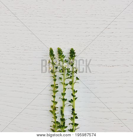 green leaves on the white wooden background