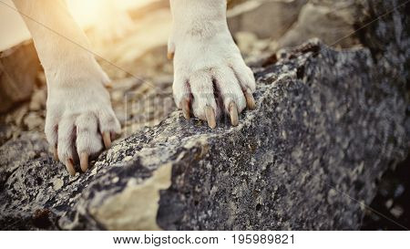 Paws of the dog standing on a stone.