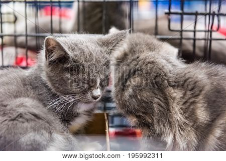 Two kittens cuddling and sleeping in a cage