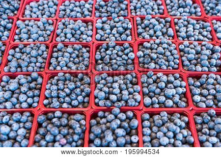 Many Blueberries On Display In Market In Red Baskets