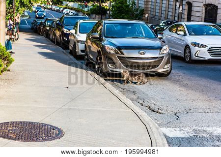 Montreal, Canada - May 27, 2017: Feral Maine Coon Cat Walking On Road By Cars On Saint Hubert Street