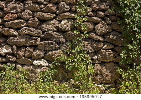 Traditional armenian old stone wall in Yerevan,Armenia.The wall is covered with wild grapes.