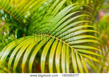 Background Of An Exotic Tropical Tree Leaf Close-up