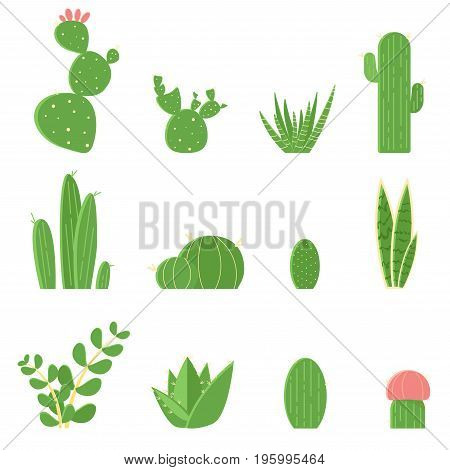Flat Vector Set Of Cacti And Succulents. Cartoon Illustration Of Cactus Isolated On White Background