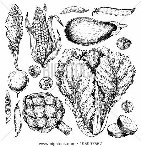 Vector hand drawn set of farm vegetables. Isolated radish, artichoke, cabbage, eggplant, corn, brussel sprout. Engraved art. Organic sketched objects. restaurant, menu, grocery market store party meal
