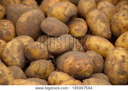 Heap Of New Potato At Retail Display Close Up