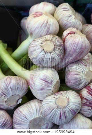Fresh Garlic Bulbs Sale On Retail Market Display