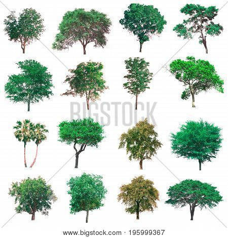 Group of isolated tree on white background.