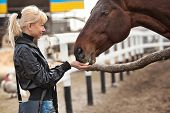 Beautiful girl feeding  her horse at ranch poster