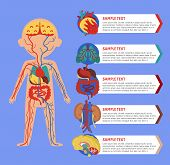 Health medical poster with human body anatomy. Kidney, lung, liver, heart, stomach, brain, intestine vector illustration. Internal organs of boy, human body physiology systems infographics. poster