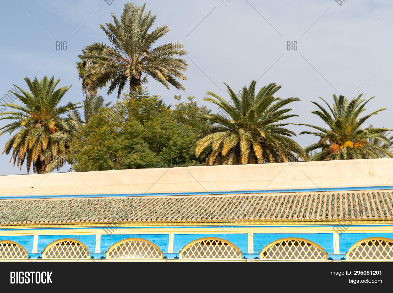 African Oasis Palm Image Photo Free Trial Bigstock
