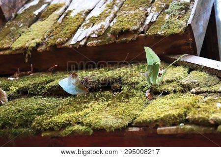 Beautiful Green Moss On Wood, Moss Closeup, Macro. Beautiful Background Of Moss For Wallpaper. - Ima