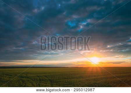 Sunset Sunrise Over Field With Young Wheat Sprouts. Bright Dramatic Sky Above Meadow. Countryside La