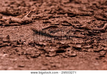 Dark and dry soil background photo in color poster