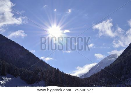 mountain with pine forest