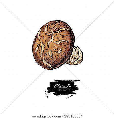 Shiitake Mushroom Hand Drawn Vector Illustration Set. Sketch Food Drawing